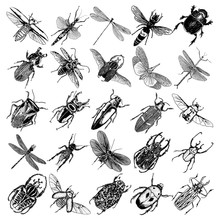 Big Set Of Insects, Bugs, Beet...
