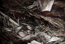 Palm Tree Body Bark