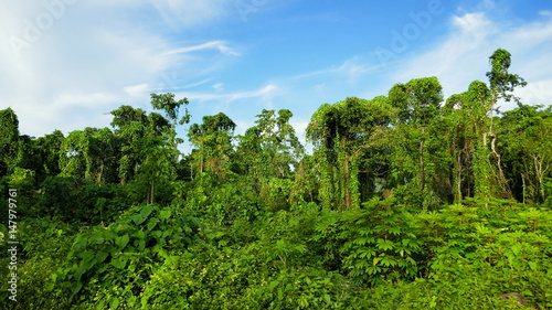 Fotobehang Hert tropischer Wald mit grünen Schlingpflanzen wild überwuchert