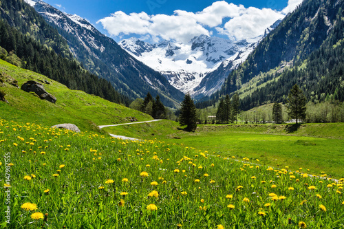 Photo Amazing alpine spring summer landscape with green meadows flowers and snowy peak in the background