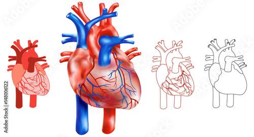 Variationen Aufbau menschliches Herz, Illustrativ - Set aus 4 ...