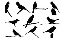 Blue Jay Silhouette Vector Ill...