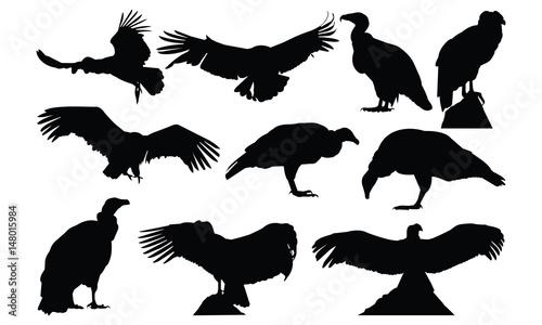 Obraz na plátně  Condor Silhouette vector illustration