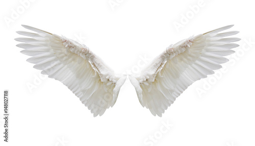 Internal white wing plumage