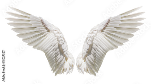 Natural white wing plumage