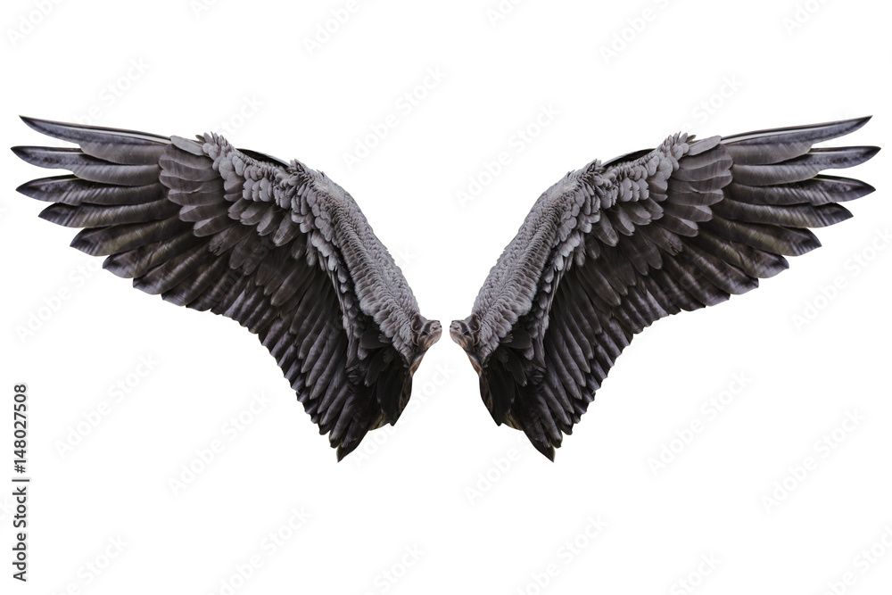 Angel wings, Natural black wing plumage