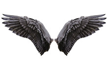 Angel Wings, Natural Black Win...
