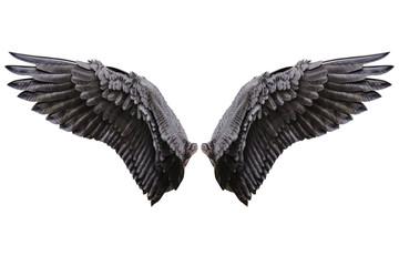 Angel wings, Natural black wing plumage