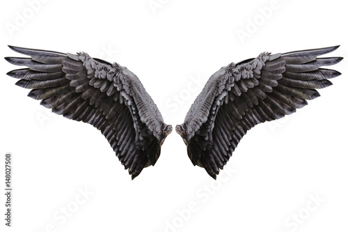 Foto auf Leinwand Adler Angel wings, Natural black wing plumage