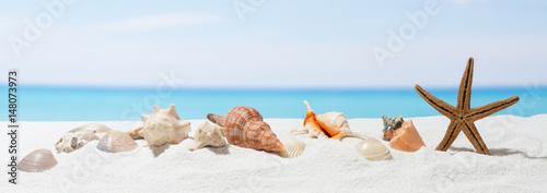 transparent-tlo-lato-z-bialym-piaskiem-seashell-i-rozgwiazda-na-plazy