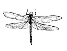 Dragonfly - Beautiful Detailed...