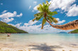 Palm tree on tropical beach. Fashion travel and tropical beach concept.