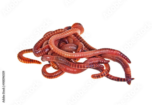 Red worms on a white background