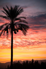 Silhouette Of Palm Tree Against Pink Sky