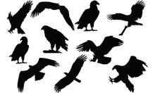 Eagle Silhouette Vector Illust...