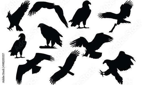Photo Eagle Silhouette vector illustration