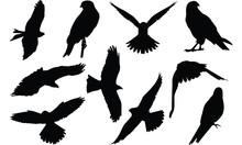Falcon Silhouette Vector Illus...