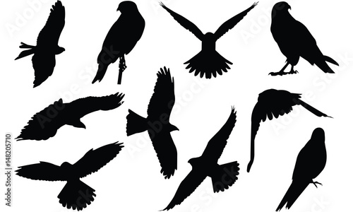 фотография Falcon Silhouette vector illustration