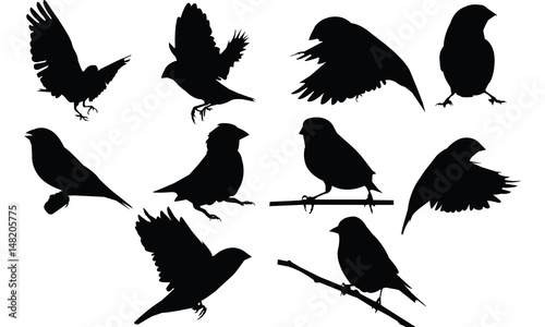 Finch Silhouette vector illustration Fototapeta