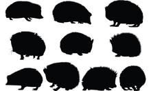 Hedgehog Silhouette Vector Illustration