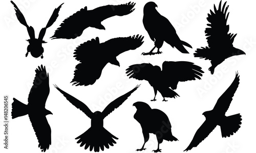 Photo Hawk Silhouette vector illustration