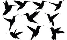 Humming Bird Silhouette Vector Illustration