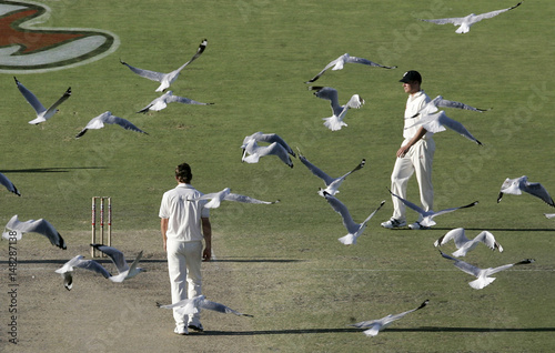 Seagulls fly past England's captain Flintoff and team mate