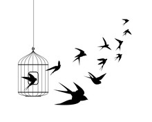 Swallow Birds Flying Out Of Cage