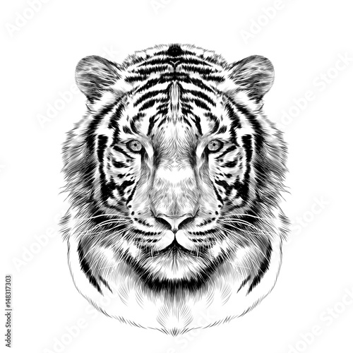 tiger head full face symmetrical, sketch vector graphics black and white drawing Fotomurales