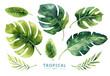 canvas print picture - Hand drawn watercolor tropical plants set. Exotic palm leaves, j