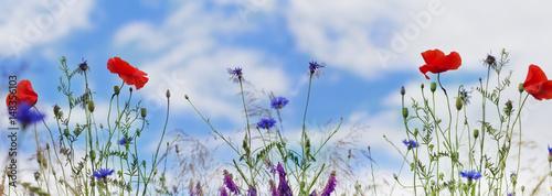 Plakat Mak, chabry, błękitne niebo, panorama