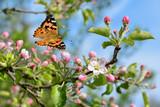 Fototapeta Natura - Schmetterling 310