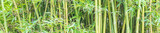Fundo verde com bambu.