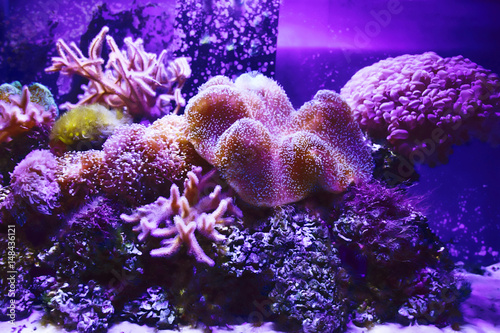 Aluminium Prints Under water coral reef underwater