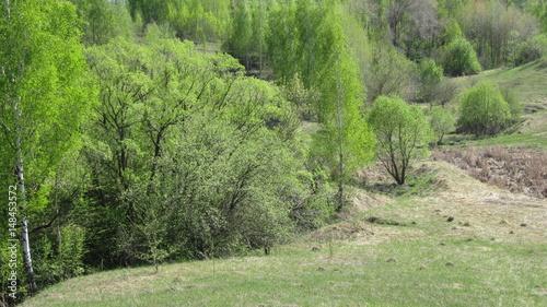 Весенний пейзаж, деревья и кустарник на склоне холма