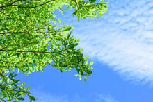 Beautiful Tree On Blue Sky Bac...