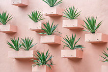 Succulents On The Wall