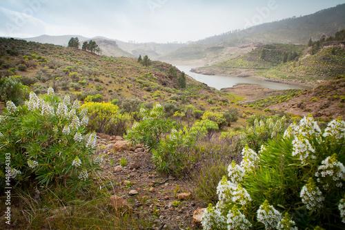 Spoed Foto op Canvas Blauwe hemel Blooming flowers in Gran Canaria mountains - Echium decaisnei, Euphorbia lamarckii.