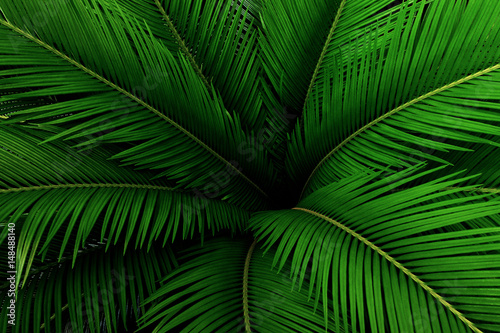 Palm leaves green pattern, abstract tropical background. Canvas Print