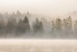 Mgłowy las i jezioro przy świtem - 148538766