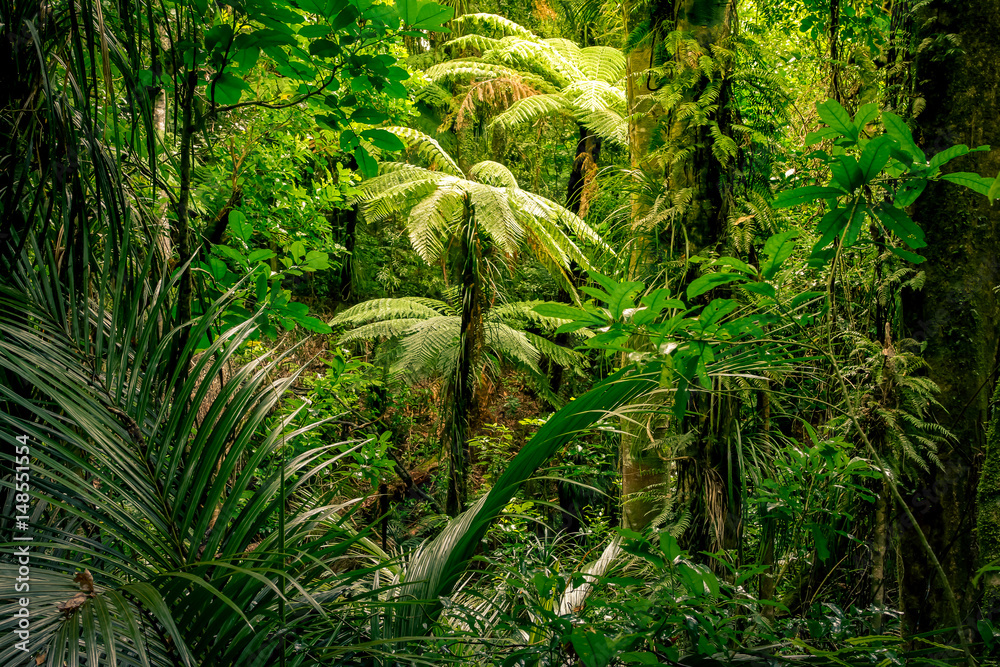 Fototapety, obrazy: Tropical jungle