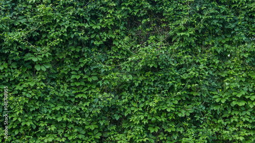 green wall, plants background