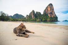 Cat At Railay Beach, Thailand