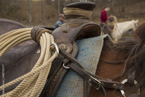 Fotografie, Obraz  Beautiful brown horse waiting to be ridden