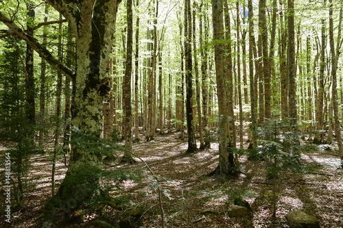 Photo Forêt de bouleaux