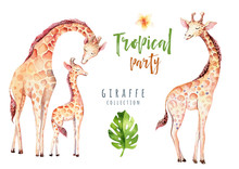 Hand Drawn Watercolor Tropical Plants Set And Giraffe. Exotic Palm Leaves, Jungle Tree, Brazil Tropic Botany Elements And Monkeys. Perfect For Fabric Design. Aloha Set