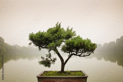 Montage in der Fensternische Bonsai Japanese bonsai tree in pot at zen garden. Bonsai is a Japanese art form using trees grown in containers, elegant design with copy space for placement your text, mock up