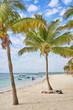 "So called ""Turtle Beach Akumal"" in Mexico / Caribbean vacation at mexican tropical Beach in Quintana Roo"