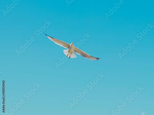 Fotografie, Obraz  lecący albatros na tle błękitnego nieba