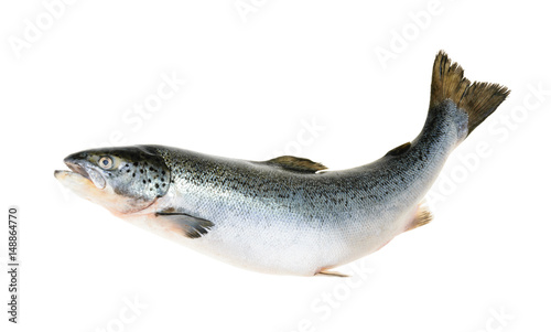 Door stickers Fish Salmon fish isolated on white without shadow